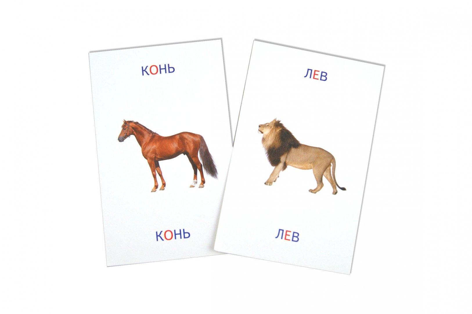 Иллюстрация 1 из 5 для Животные. Книга + карточки - Тамара Шапошникова | Лабиринт - игрушки. Источник: Лабиринт