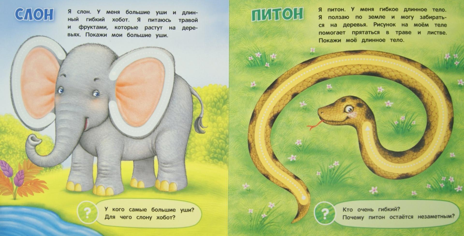 Иллюстрация 1 из 6 для Животные - Оксана Шакаль | Лабиринт - книги. Источник: Лабиринт