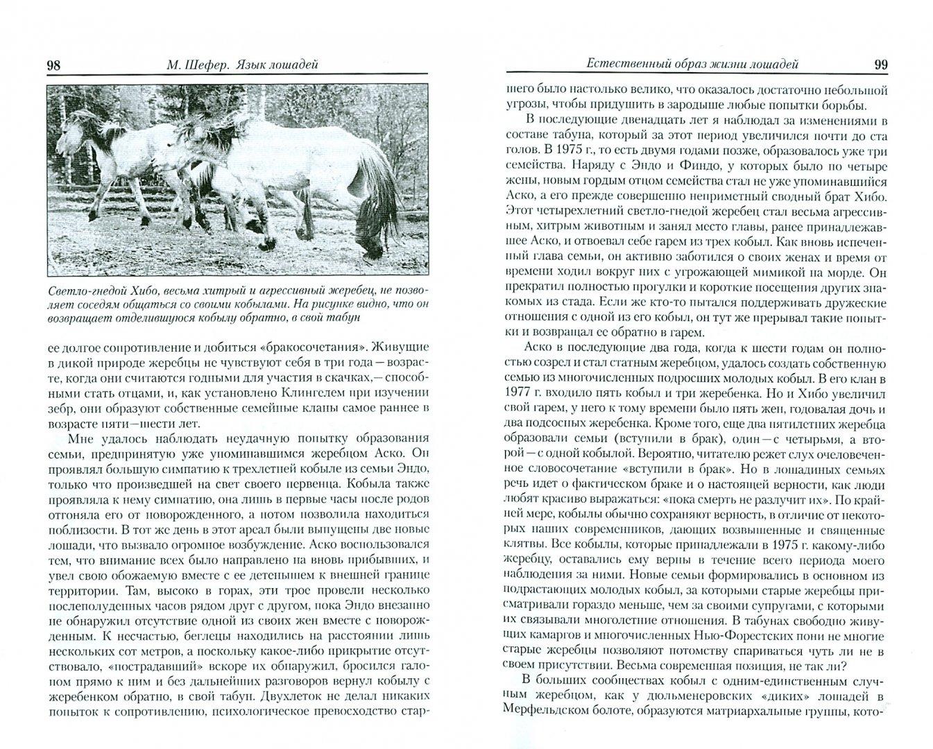 Иллюстрация 1 из 7 для Язык лошадей. Образ жизни, поведение, формы общения - Михаэль Шефер   Лабиринт - книги. Источник: Лабиринт
