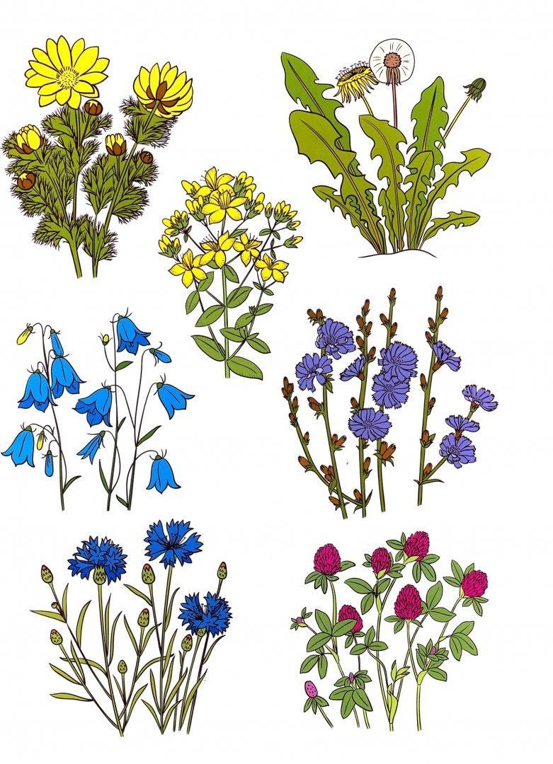 Растения и их названия картинки для детей