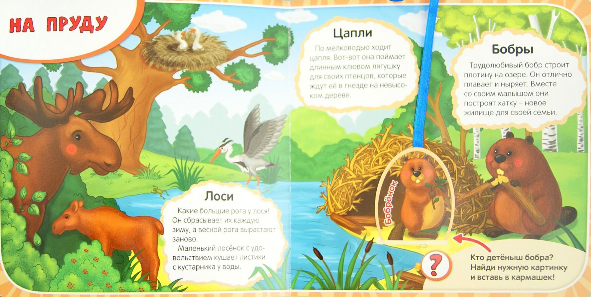 Иллюстрация 1 из 15 для Кто в лесу живет? - Елена Мирная | Лабиринт - книги. Источник: Лабиринт