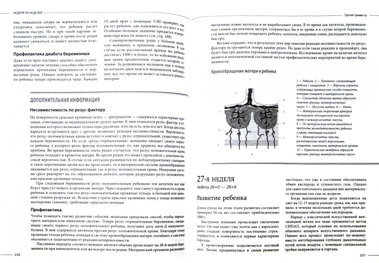 Иллюстрация 1 из 21 для Беременность от А до Я. Комплексная консультация будущей мамы по неделям - Кайнер, Нольден | Лабиринт - книги. Источник: Лабиринт