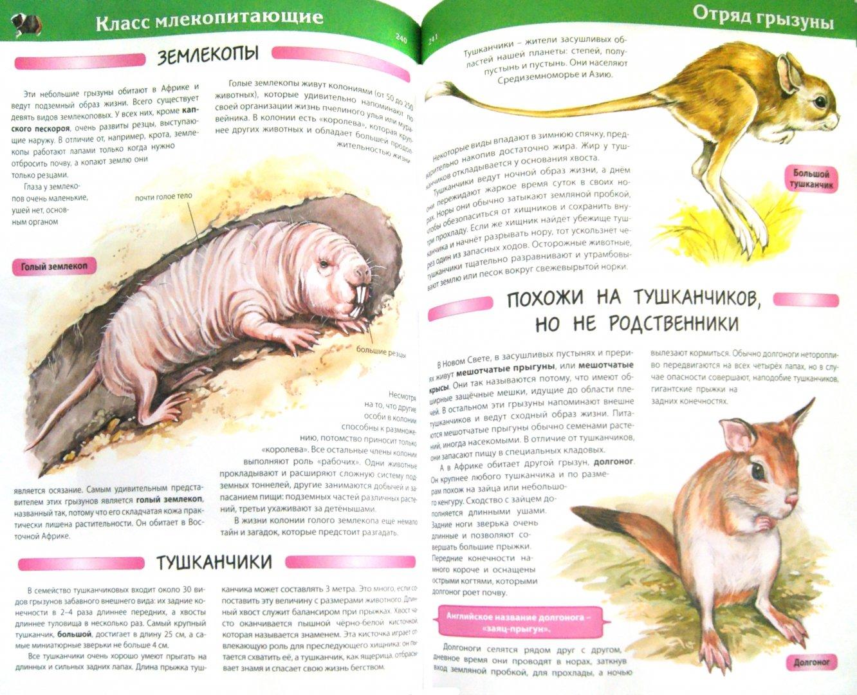 Иллюстрация 1 из 43 для Большая детская энциклопедия животных - Рублев, Скиба | Лабиринт - книги. Источник: Лабиринт