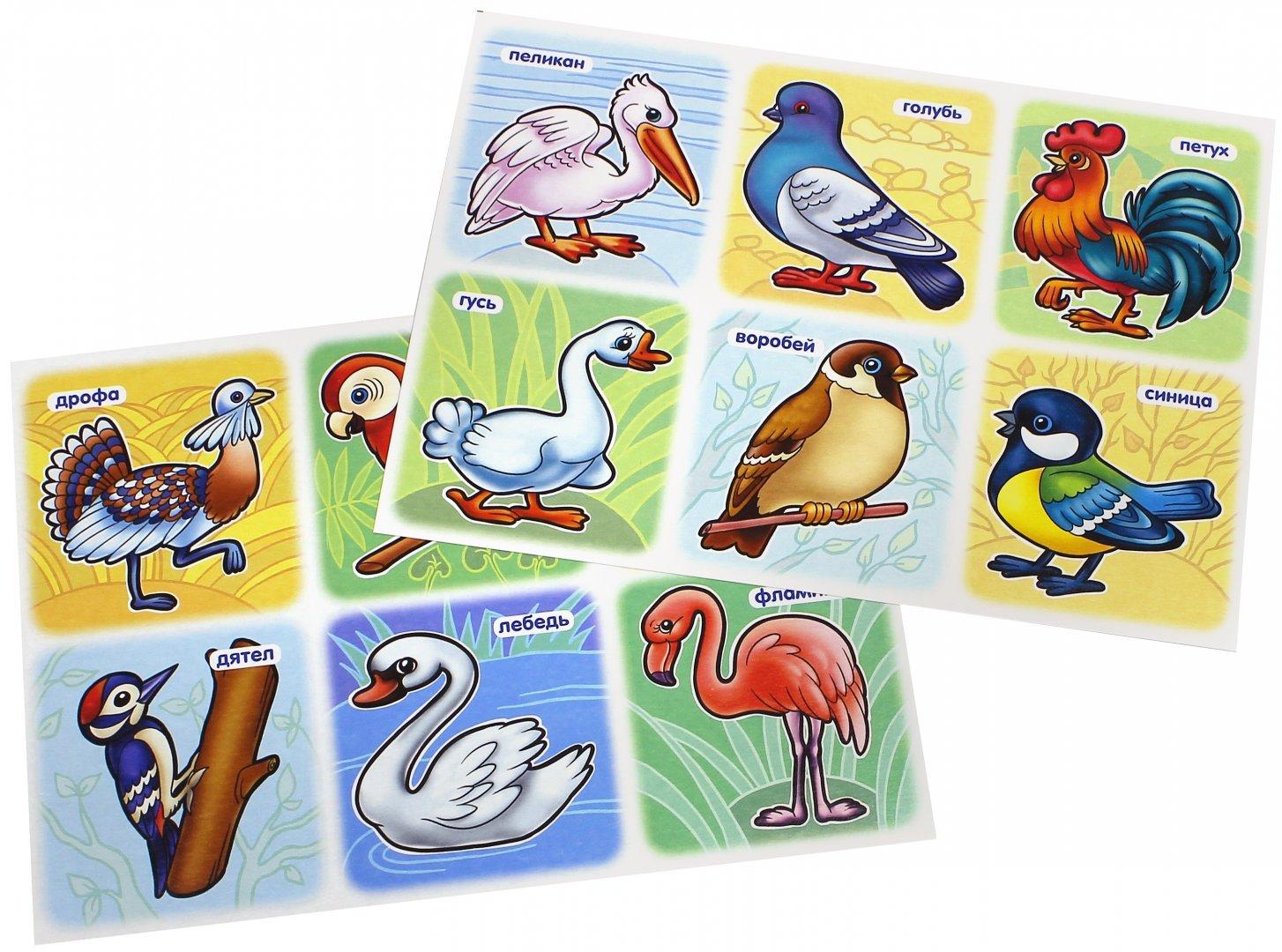 птицы дидактические картинки подобный музей