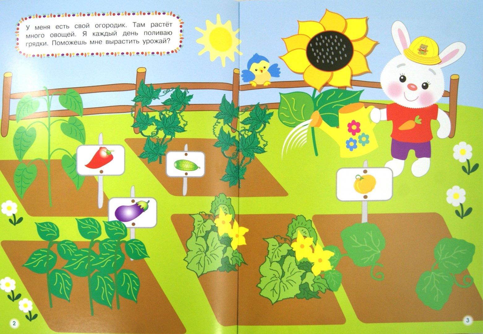 Иллюстрация 1 из 40 для Овощи-фрукты | Лабиринт - игрушки. Источник: Лабиринт