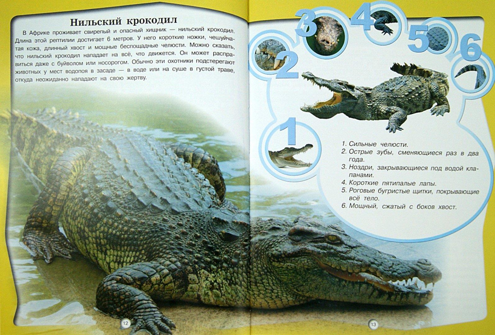 Иллюстрация 1 из 17 для Животные - Д. Кошевар   Лабиринт - книги. Источник: Лабиринт