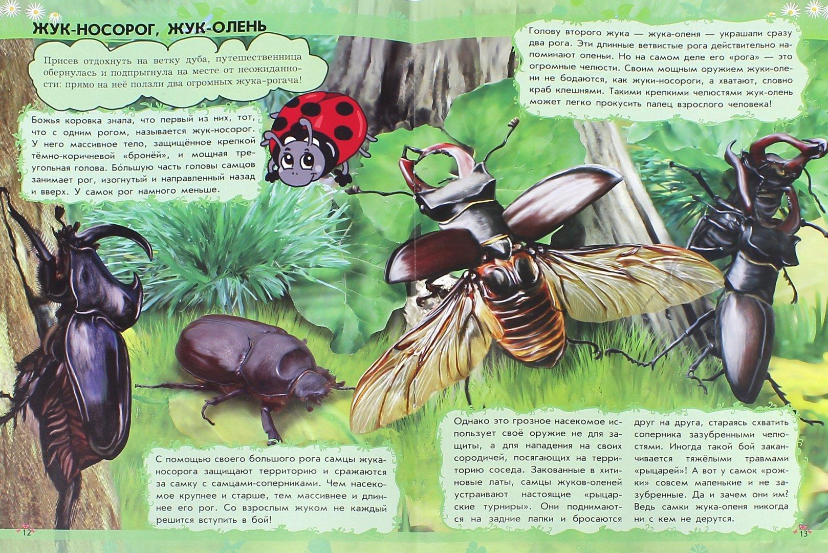 Иллюстрация 1 из 15 для О чём поёт кузнечик? Насекомые - Анна Макулина   Лабиринт - книги. Источник: Лабиринт