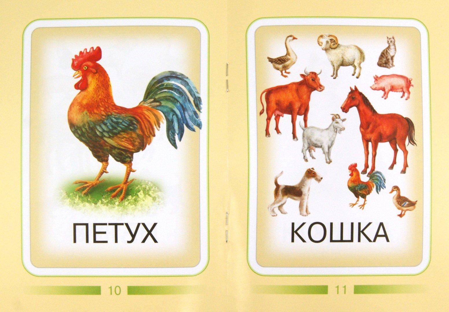 картинки животных с названиями для самых маленьких это непростой предмет