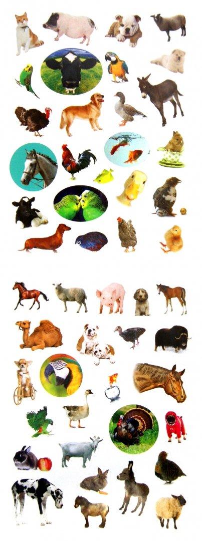Иллюстрация 1 из 13 для Домашние любимцы   Лабиринт - книги. Источник: Лабиринт