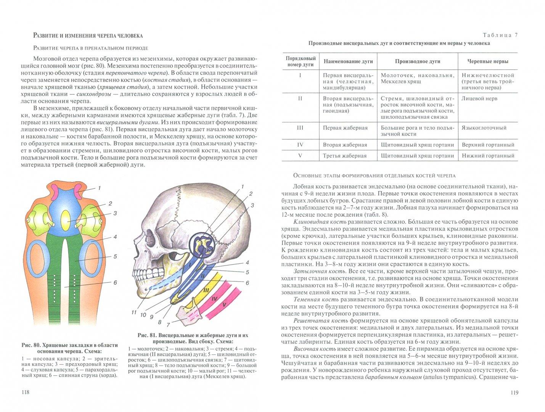 Иллюстрация 1 из 15 для Анатомия человека. Учебник в 3-х томах. Том 1 - Сапин, Клочкова, Никитюк   Лабиринт - книги. Источник: Лабиринт