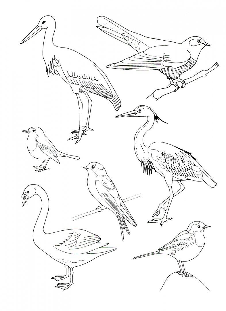 Рисунок на тему перелетные птицы карандашом