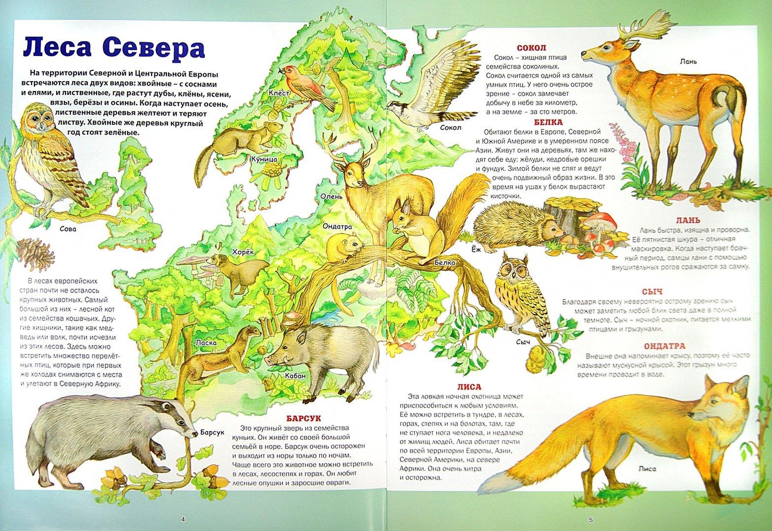 Иллюстрация 1 из 6 для Атлас животных планеты Земля - Анита Анселми | Лабиринт - книги. Источник: Лабиринт