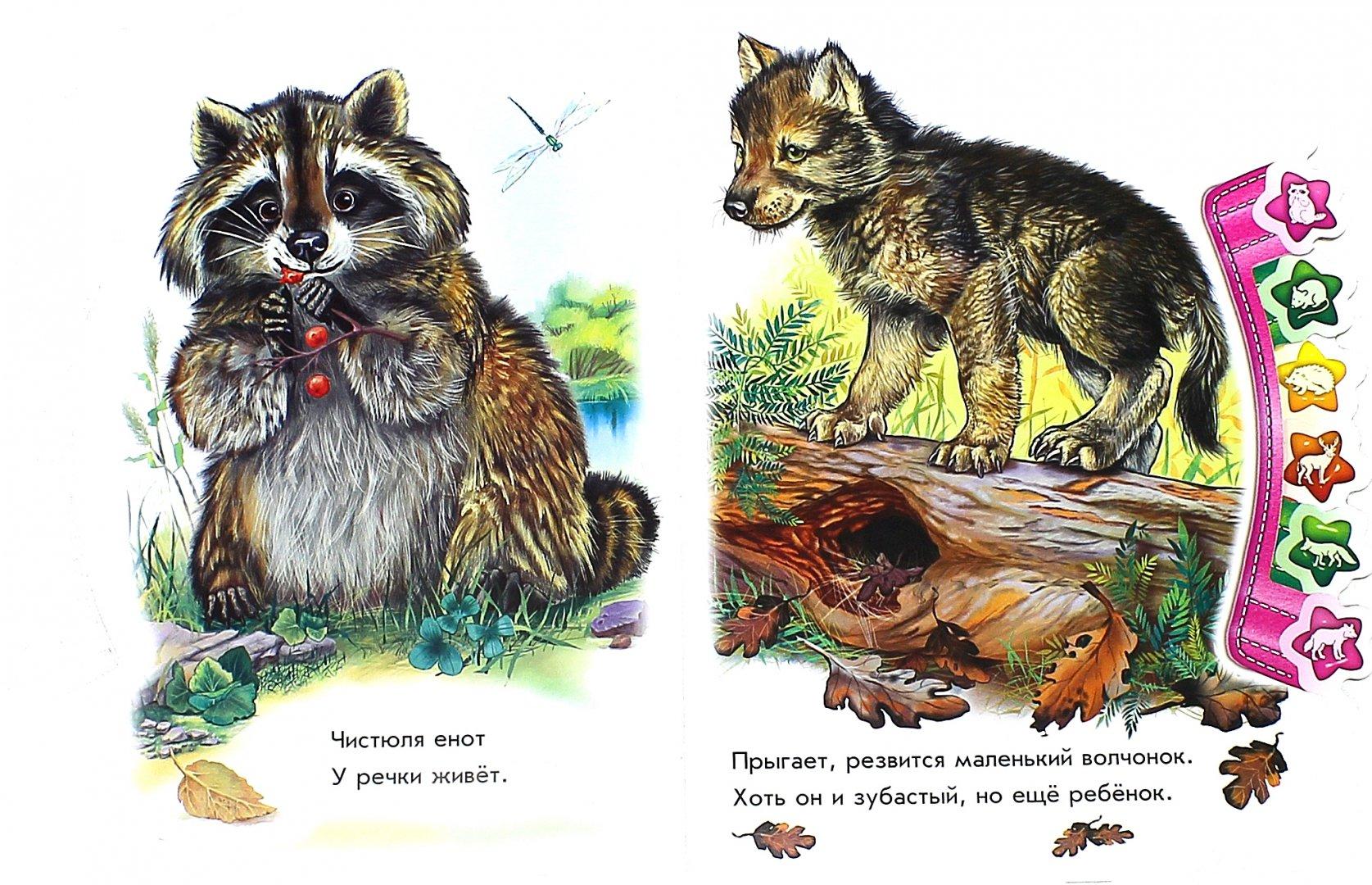 Иллюстрация 1 из 35 для В лесу - Олеся Квитка   Лабиринт - книги. Источник: Лабиринт