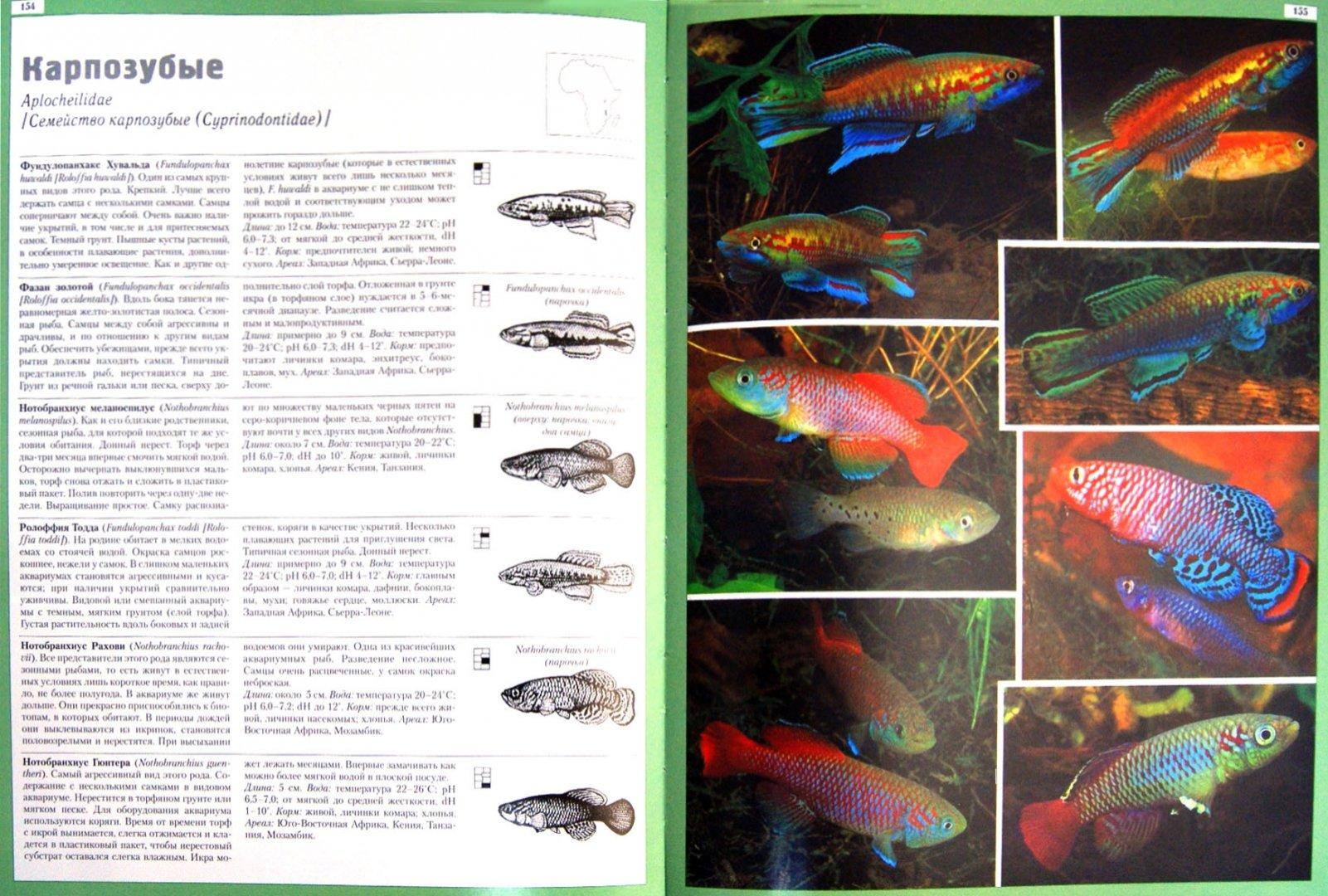 фото и названия всех аквариумных рыбок после протеуса все