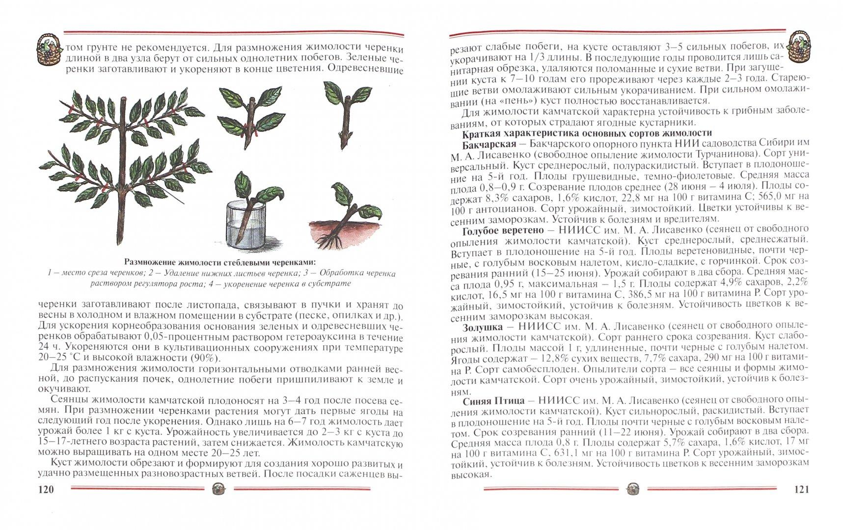 Иллюстрация 1 из 45 для Ранний урожай плодов, ягод. Пособие для садоводов-любителей - Александр Ракитин | Лабиринт - книги. Источник: Лабиринт