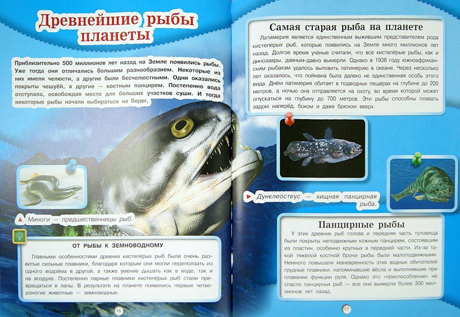 Иллюстрация 1 из 6 для Подводный мир - Д. Кошевар | Лабиринт - книги. Источник: Лабиринт