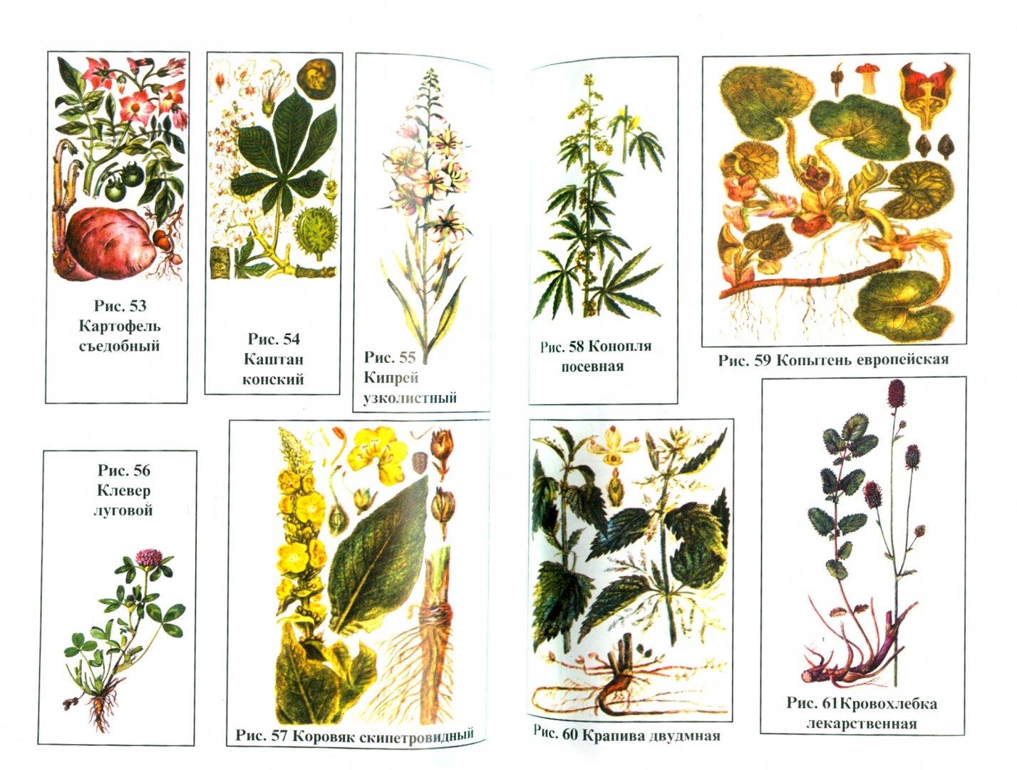 справочник лечебных трав в картинках последнее