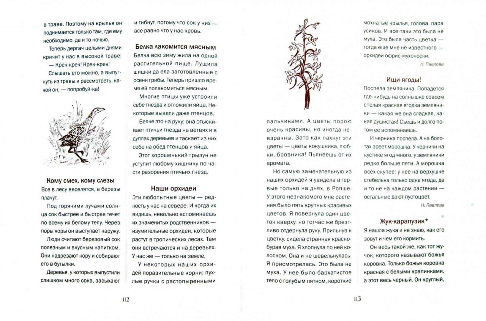 Иллюстрация 1 из 42 для Лесная газета на каждый год. Весна-Лето - Виталий Бианки | Лабиринт - книги. Источник: Лабиринт