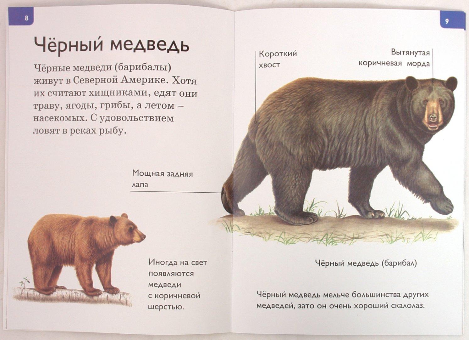 Иллюстрация 1 из 20 для Медведи - Дениз Райан   Лабиринт - книги. Источник: Лабиринт